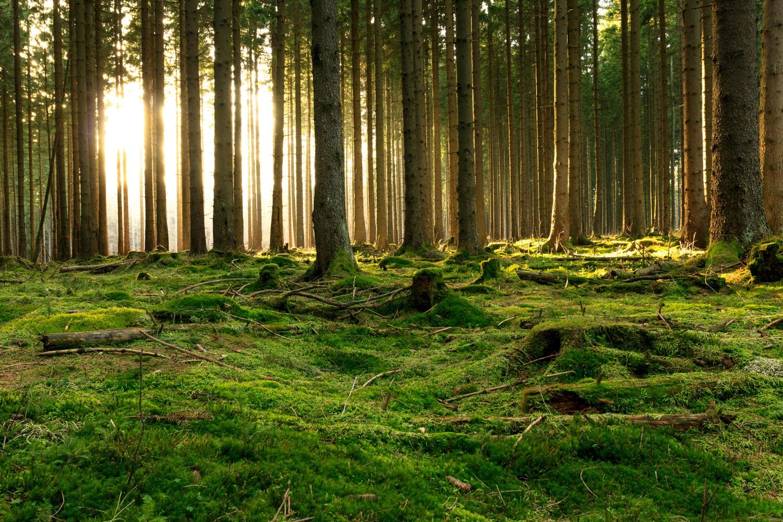 Wald für Startseite Beratung und Therapie